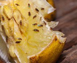Jak pozbyć się muszek owocówek? Pięć skutecznych i tanich metod
