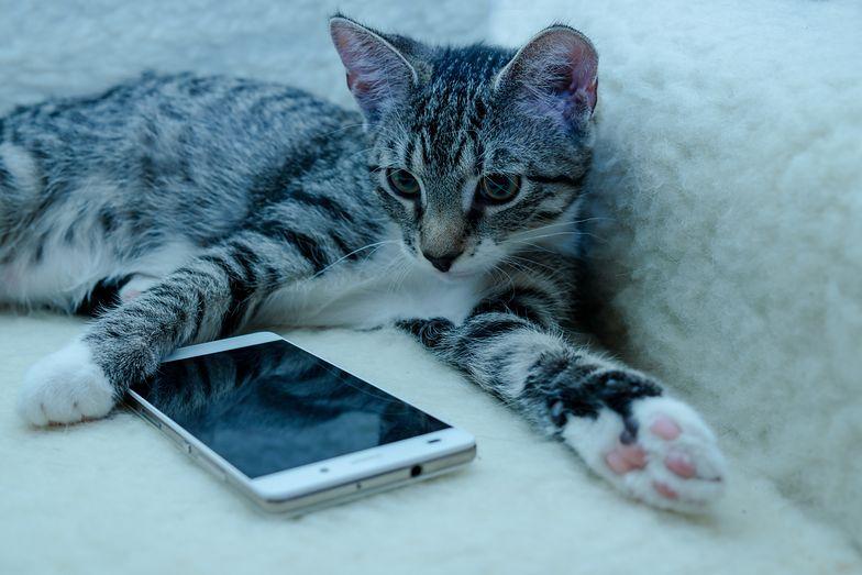 Ta aplikacja będzie hitem? Właściciele kotów powinni ją pokochać