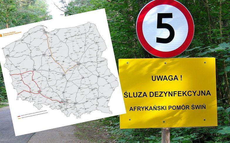 Generalna Dyrekcja Dróg Krajowych i Autostrad zamyka przejścia dla zwierząt wzdłuż kolejnych odcinków autostrad i dróg ekspresowych.