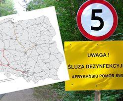 ASF w Polsce. Producenci trzody chlewnej chwalą GDDKiA