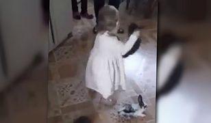 Małe dziecko rzucało królikami o podłogę. Rodzice tylko zachęcali