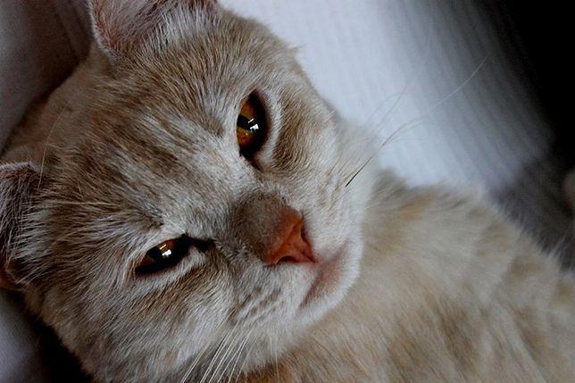 Darmowe czipowanie psów i kotów do 15 grudnia