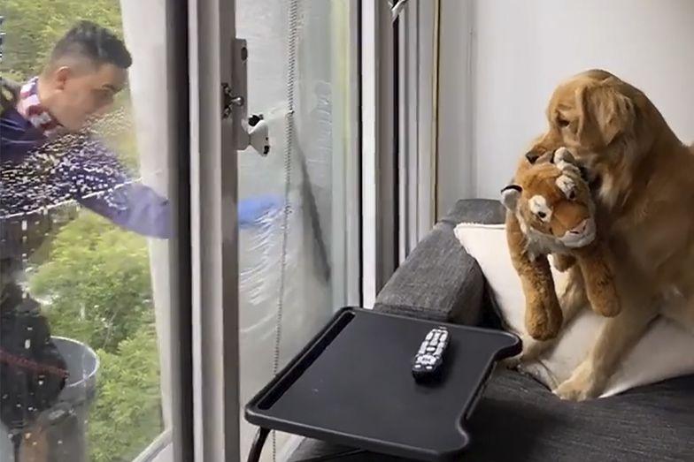 Pies zobaczył mężczyznę za oknem. Niesamowite, co stało się później
