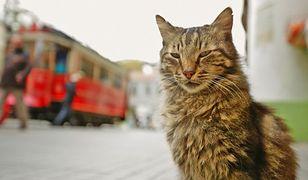 """""""KEDI"""" – koci film, który podbił świat. Teraz w Polsce"""