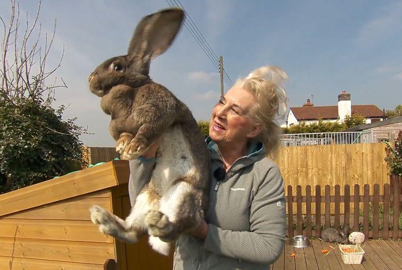 Była modelka Playboya zdruzgotana. Ukradli jej największego królika świata