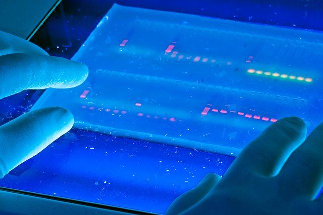 Wydrukowany na kartkach genom miał prawie 300 metrów długości
