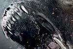 ''Gniew tytanów'': Perseusz w bojowym szale na plakacie [foto]
