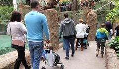 Zoo we Wrocławiu z rekordową frekwencją. Pobiło Wawel i Wieliczkę