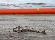 Katastrofa w Zatoce Meksykańskiej spowodowała olbrzymie straty