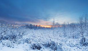 Meteorolodzy tłumaczą, że w tym roku listopad w Finlandii jest wyjątkowo ponury ze względu na braki stref wysokiego ciśnienia