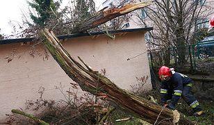 Załamanie pogody w Polsce. Silny wiatr paraliżuje kraj