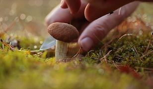 Jak poprawnie czyścić grzyby