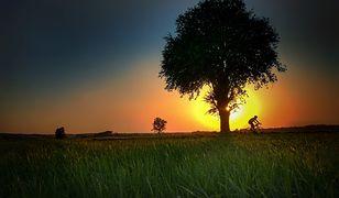 Wycieczki rowerowe to idealny pomysł na relaks
