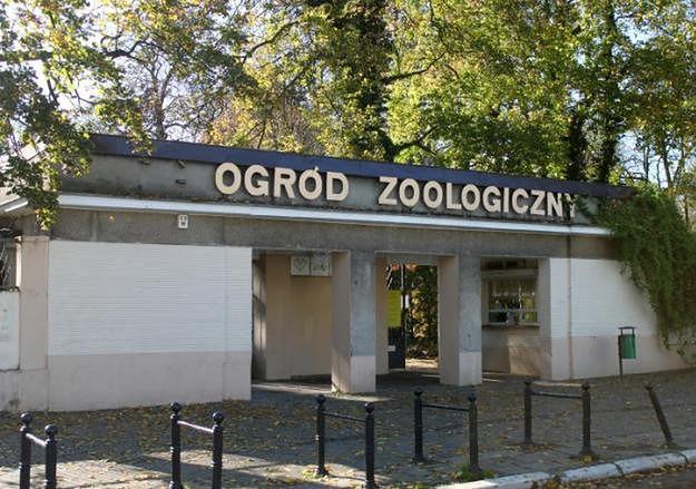 Kierownik Starego Zoo w Poznaniu był pijany w pracy. Zostanie zwolniony?