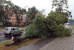 Łódź po niszczycielskich burzach. Miasto oszacowało straty