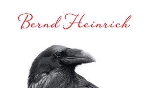 Umysł kruka. Badania i przygody w świecie wilczych ptaków