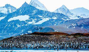 Zatoka St. Andrews to plaża o długości trzech kilometrów, znana z ogromnej liczby zwierząt