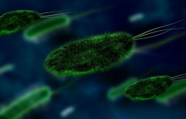 Bakterie czyhają na nas wszędzie. Jak skutecznie z nimi walczyć?