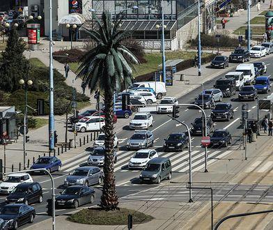 Warszawa. W sobotę palma na rondzie de Gaulle'a kończy 18 lat. Apel o życzenia