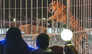 Tarnów nie chce cyrkowców z żywymi zwierzętami
