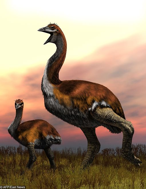 Vorombe Titan - największy gatunek ptaka w historii Ziemi