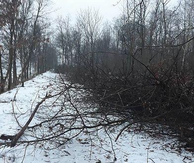 Wycięte drzewa w okolicach Kanału Żerańskiego