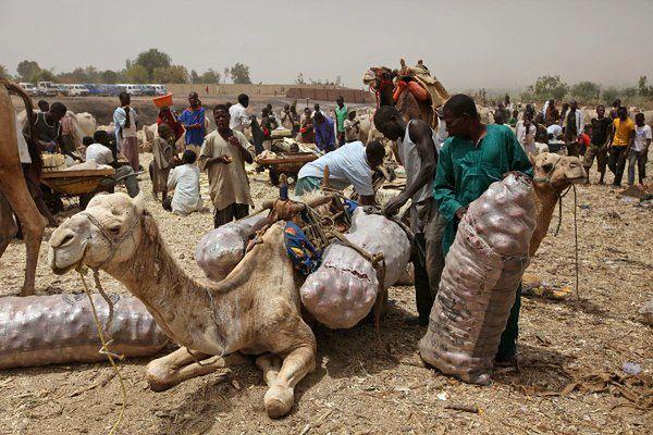 Kuria rekrutuje do pracy w Afryce