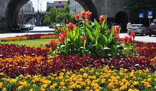 120 tys. kwiatów za blisko 300 tys. zł. Rozpoczęły się wiosenne nasadzenia