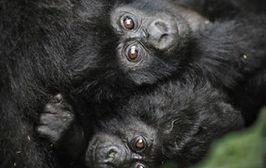 Triki małpki Fiki-Miki