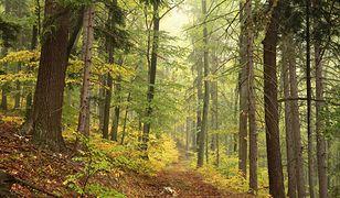 Co jeszcze kryją polskie lasy? (zdjęcie poglądowe)