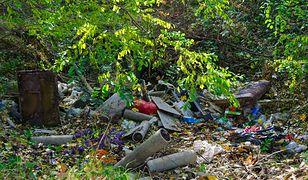 Śmieci w lesie - zdjęcie poglądowe