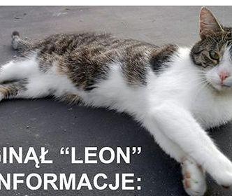 Znalazca kota wzbogaci się aż o 5 tysięcy złotych