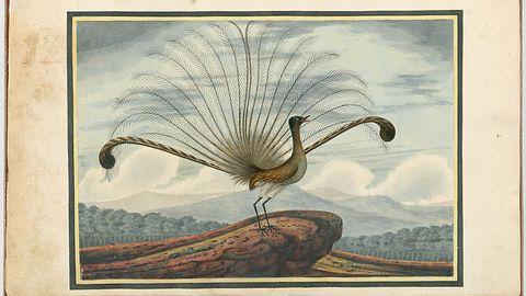 Lyrebird przemówi twoim głosem, wystarczy mu minuta słuchania