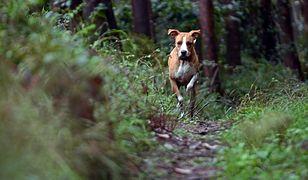 Warszawa. Psy w Lesie Kabackim zabronione. Mieszkańcy mają różne zdania
