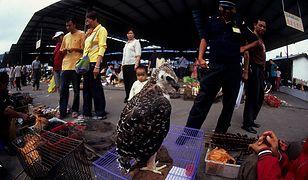 Chiny zdecydowały o zakazie jedzenia dzikich zwierząt. Wprowadzenie nowych zasad nie będzie łatwe