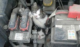 Silnik nie jest bezpiecznym schronieniem dla kotów.