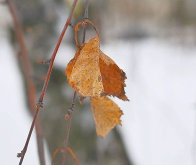 Jak zadbać o siebie jesienią? Mamy na to sposoby