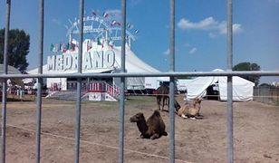 Będzie protest pod cyrkiem Medrano