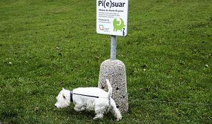 Psy posiadają zmysł magnetyczny.