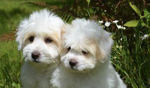 Badanie pokazało, że źle się żegnamy z psami