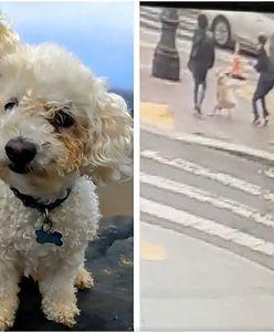USA. Pies zagryziony na oczach właścicielki