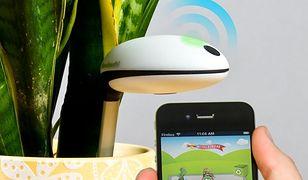 Koubachi Wi-Fi Plant Sensor - urządzenie, które przypilnuje twoich roślin
