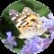 Biologia - Quiz Maturalny icon