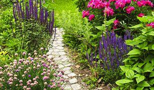 Susza im niestraszna – rośliny ogrodowe, których nie musisz podlewać