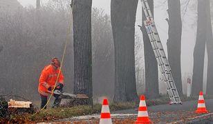 Internautów podzieliła kwestia przydrożnych drzew
