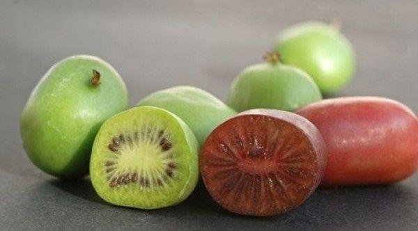 Na SGGW wyhodowali nową odmianę owoców. Minikiwi już w sklepach!
