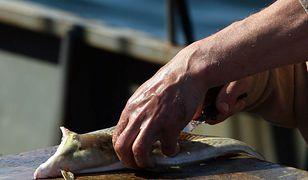 Rybacy biją na alarm. W przybrzeżnych wodach Bałtyku nie ma już dorszy.
