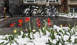 Mieszkańcy Ukrainy są zaskoczeni opadami śniegu w maju