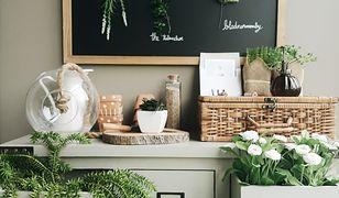 Domowe rośliny to źródło zdrowia