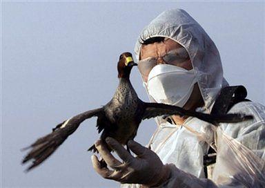 We Francji trwa zmasowana kontrola dzikiego ptactwa